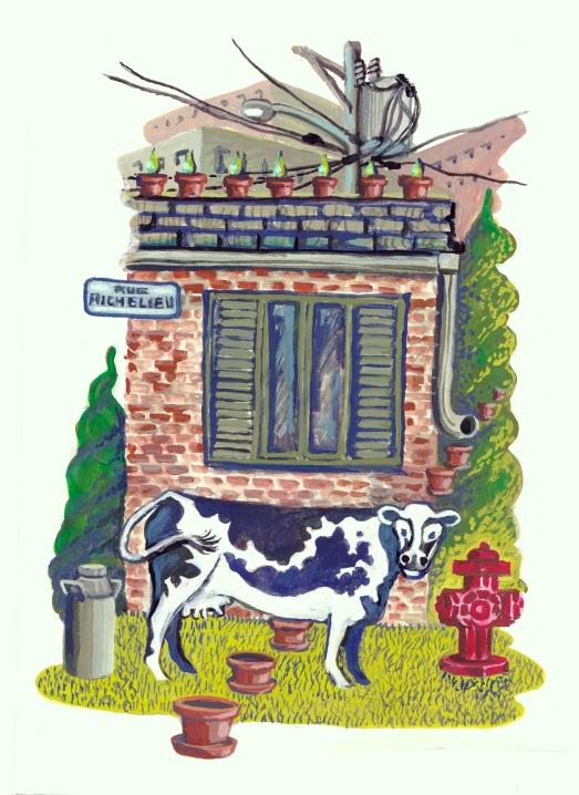 coul vache