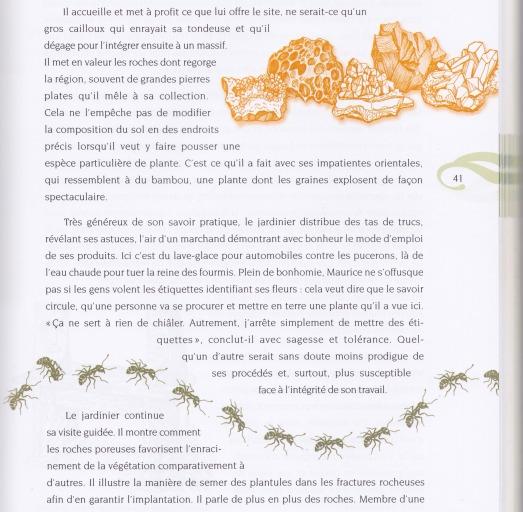 page fourmis roches